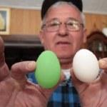 Κότα γεννάει βαμμένα αυγά