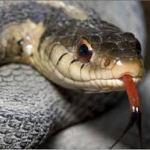 Ένα φίδι μέσα σε ανθρώπινο σώμα…