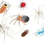 Ανακαλύφθηκε νέο είδος εντόμου