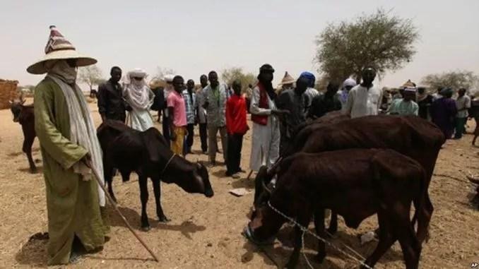 miyetti allah cattle breeders