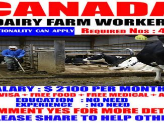 canada dairy farms hiring workers