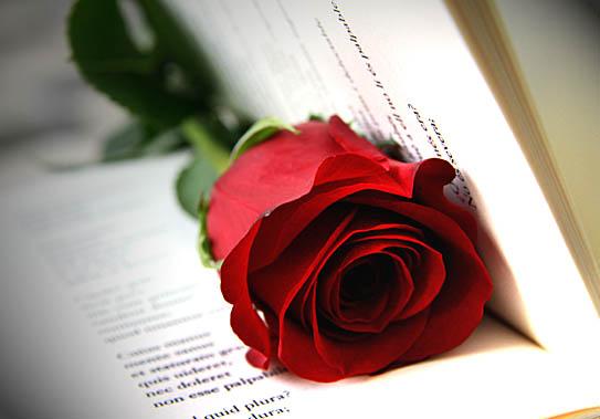 Curiosità: perché i libri romantici si chiamano Romanzi Rosa?