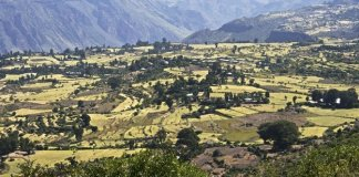 The highlands of Ethiopia could be more vulnerable to malaria if temperatures rise