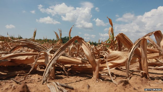 The impact of global warming on crop yields is a critical issue for this IPCC report