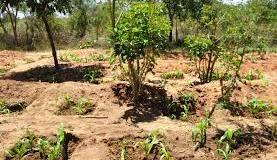 Zai Technology Farming