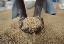 african grains