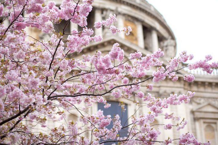 London Bloom