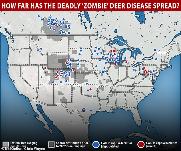 So far, there is no evidence that chronic wasting disease can cross species from deer to humans. But abnormal prion diseases can take years to show up and prions are known to mutate into new forms. Pictured: The spread of the diseease in the US