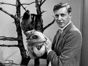 David Attenborough with an armadillo on BBC TV in 1963.
