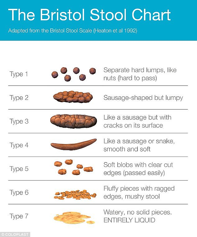 The Bristol Stool Scale was formalized in 1992 and ranks stool into seven different types