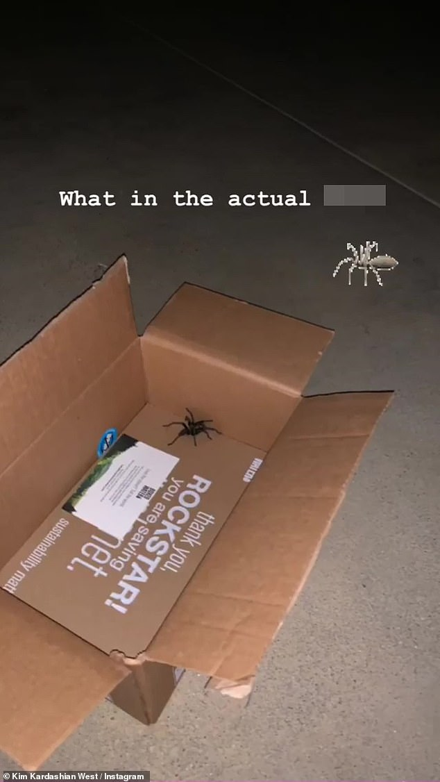 Repeat offenders: It's not the first close encounter of the eight-legged kind that Kardashian has experienced