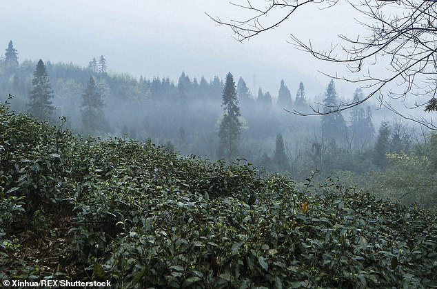It was determined that the total biomass of insects in the forests studied had declined by about 40 percent since 2008