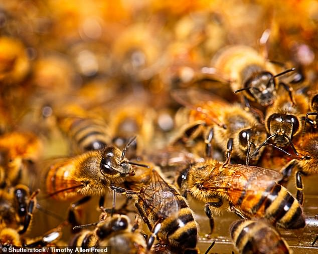 Researchers in Poland placed 90,000 honeybees in a sealed tent for two weeks to see how bees would adapt to conditions similar to what they might be like in a colony on Mars