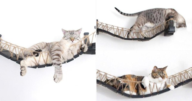 a bridge designed for cats