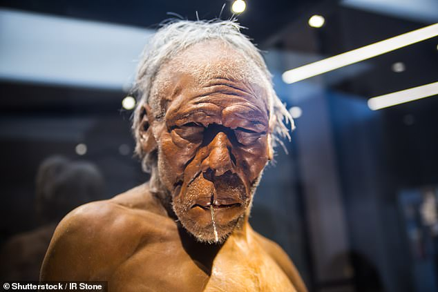 The researchers suggest that Neanderthals (pictured above) lacked a series of mutations in the BAZ1B gene that's linked to the parts of the brain that control facial expression