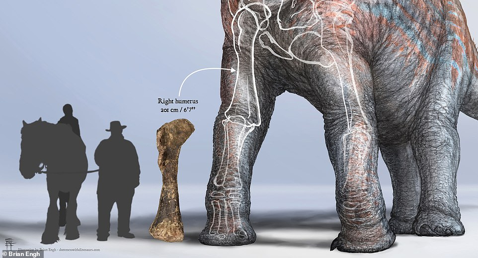 The bone stands taller than six feet and was larger than the researchers that discovered it