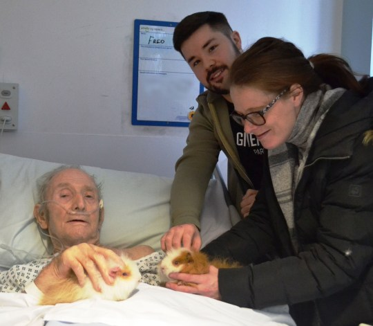 PIC FROM Kennedy News and Media (PICTURED: FORMER NAVY STEWARD FRED WALKER, 93, WITH GUINEA PIGS MAX AND MARTHA AND HOSPITAL STAFF DEAN MCDERMOTT, 23, AND JENNY DAY, 31) This is the tear-jerking moment a 93-year-old stroke patient is the 'happiest his nurses have ever seen him' as he gets to cuddle his only two 'family members' during a visit on January 29 - and both are GUINEA PIGS. Fred Walker has been in Blackpool Victoria Hospital since November, so when he mentioned his two guinea pigs Max and Martha, two staff members found a way to bring them in. Jenny Day, a trainee assistant practitioner, and health care assistant Dean McDermott phoned the RSPCA who told them the guinea pigs were staying with Fred's neighbour. DISCLAIMER: While Kennedy News and Media uses its best endeavours to establish the copyright and authenticity of all pictures supplied, it accepts no liability for any damage, loss or legal action caused by the use of images supplied and the publication of images is solely at your discretion. SEE KENNEDY NEWS COPY - 0161 697 4266