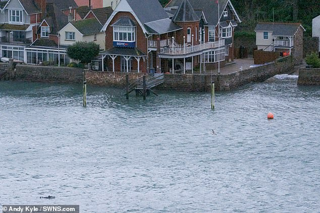 The dolphins were spotted near the Royal Dart Yacht Club in Kingswear, Devon (pictured). Mr Kyle said the dolphins were in the harbour for nearly an hour