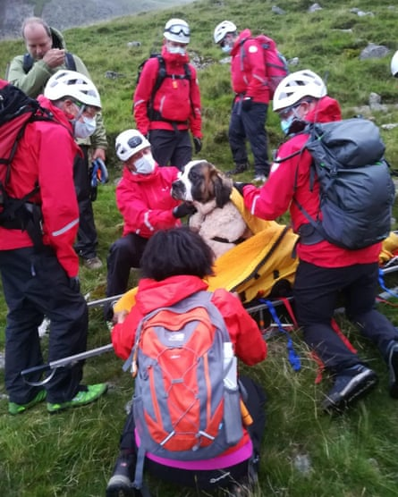 Mountain rescue team with dog on stretcher