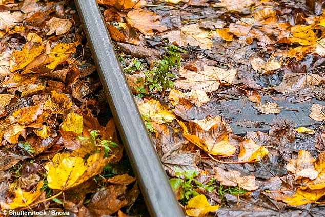 A groups of chemical compounds found in many leaves, called tannins, are thought to be responsible for the 'leaves on the line' issue experienced by many rail commuters (stock)