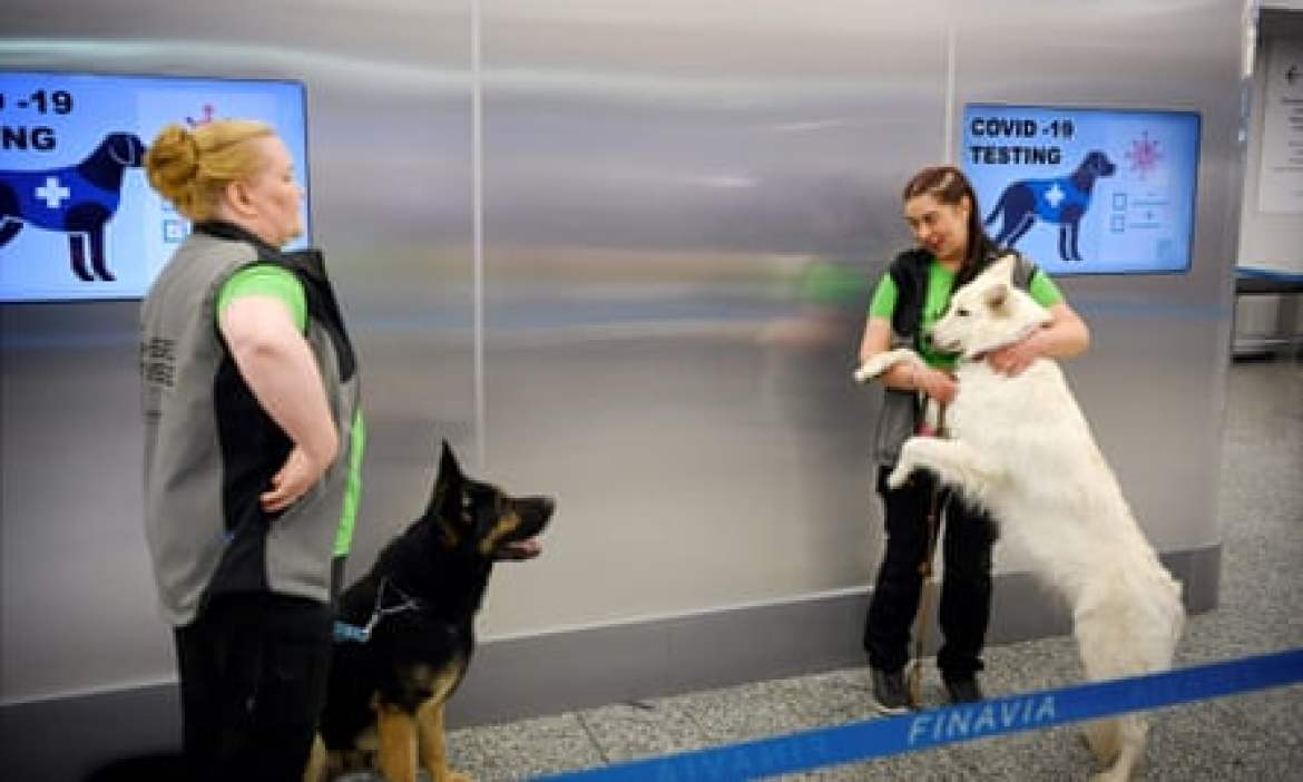 Two coronavirus sniffer dogs, Valo (L) and ET, await orders at Helsinki airport