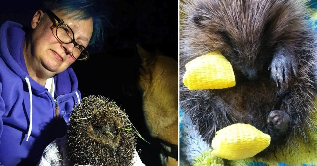 Katherine Martinez who broke the speed limit to get an injured hedgehog medical attention quickly