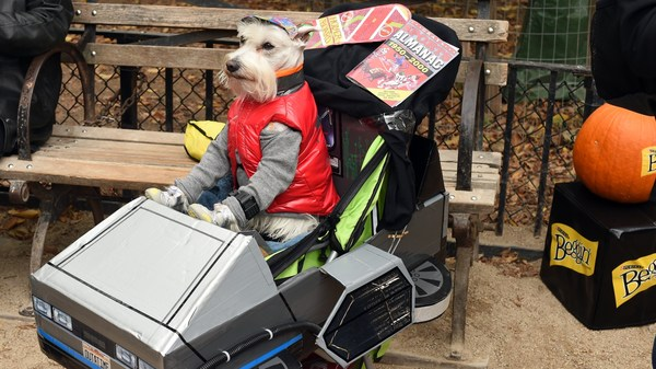 A dog dressed as Marty McFly from Back to the Future attends the 25th Annual Tompkins Square Halloween Dog Parade in 2015. New research says time travel might be possible without the problems McFly encountered.