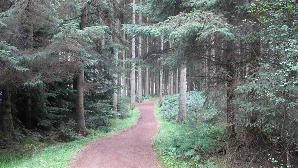 forest in northumberland