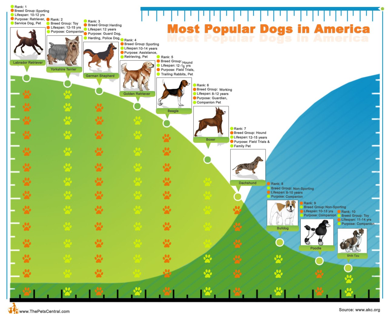 Popular Dogs Infographic