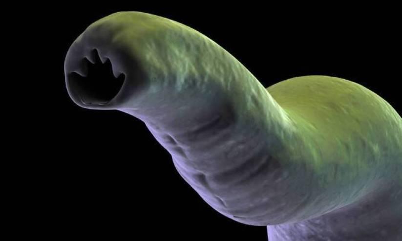 Άσθμα: Αυτό που βλέπετε είναι το σκουλήκι που μπορεί να συμβάλλει στην θεραπεία!