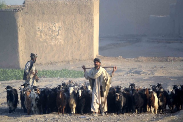 Cattle traders from Afghanistan bring a large numbers of sheep and goat into the local market to sell them at the market in Chaman. Photo by Matiullah Achakzai/News Lens Pakistan