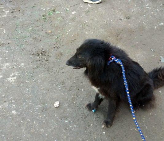 Pet Fair Peshawar