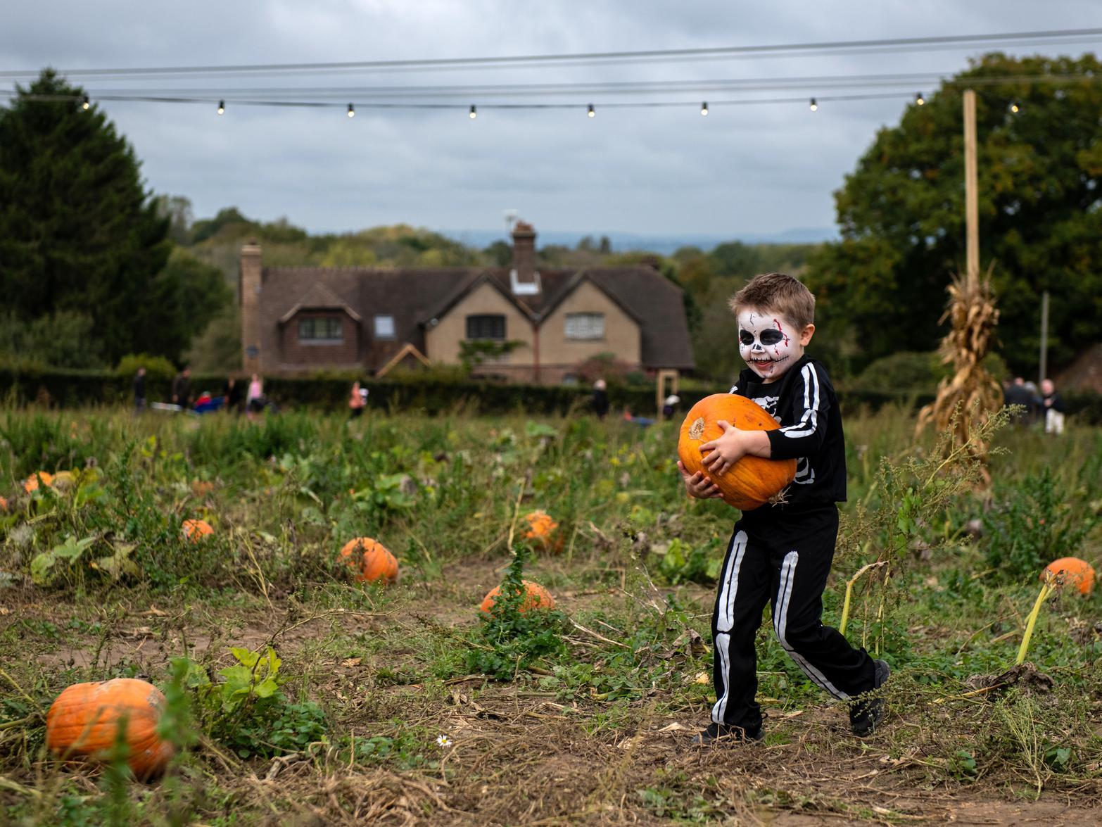 Want to make your smartphone a little spookier this halloween? Pumpkin picking in Northern Ireland 2021: 8 patches and farms near me to visit this autumn and ...