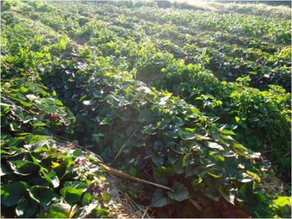臺南-秀明自然農法課程 - 上下游News&Market新聞市集