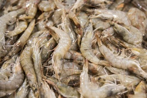 China Bans Some Food Imports After Detecting Covid-19 On Shrimp