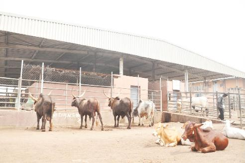 Northern Blockade: Beef Scarcity, Rising Cost Of Food Items Hit Southern States