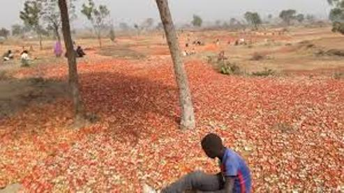 Northern Tomato Traders Lose Over  ₦10bn In One Week, Begs For Removal Of Blockade