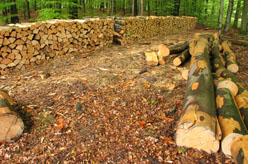 Die Rotbuche Ist Mit Einem Anteil Von 9 Am Ertragswald