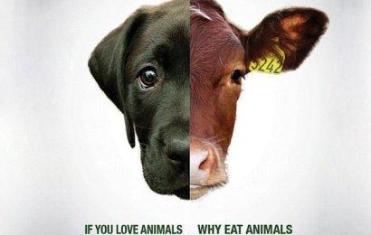 Hayvansever Olduğunuzu Düşünüyorsanız Yanılıyorsunuz