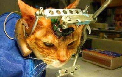 Hayvanlar Üzerinde Deney Yapan Markalar