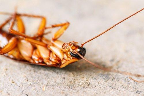 Evde Haşere ve Böceklerden Kurtulmanın Doğal Yolları…