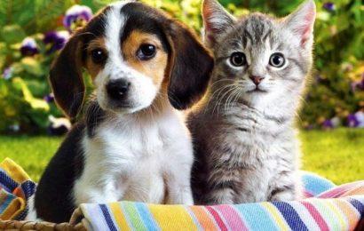 Hayvan Hakları Yasası'yla İlgili Rapor Bekleniyor