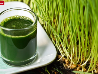 wheatgrass therapy