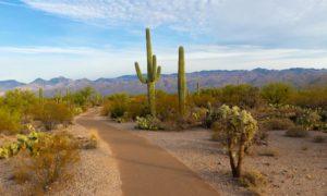 Légalisation du cannabis en Arizona