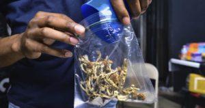 Dépénalisation du cannabis et champignons hallucinogènes au New Jersey