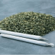 Frequent marijuana smoking increases stroke risk