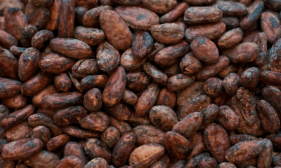 NSE lifts trading suspension on FTN Cocoa