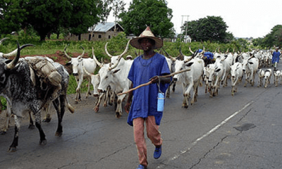 Herdsmen: How Mnyim survived Fulani militants attack in Benue