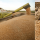 Nigeria imports N42.3bn wheat in 1 month as U.S. raise price