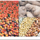 Agric group announces merger, invests $12m